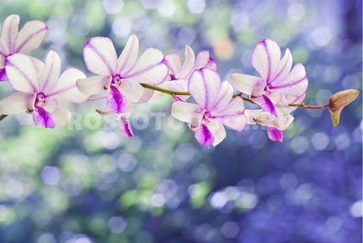 Веточка с орхидеями