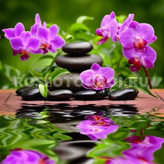 Фотообои Орхидея на камнях
