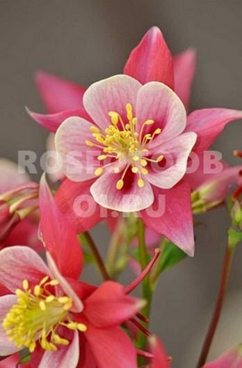 Фотообои Необычные цветы