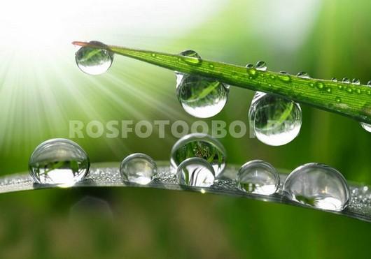 Фотообои Трава с каплями
