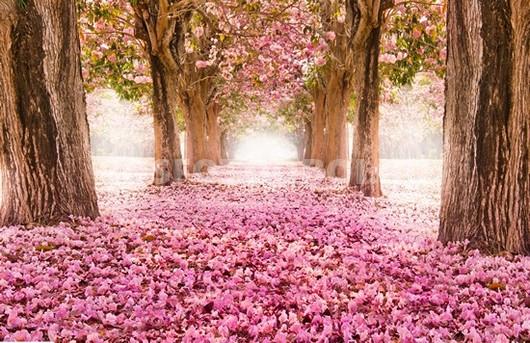 Цветущая аллея