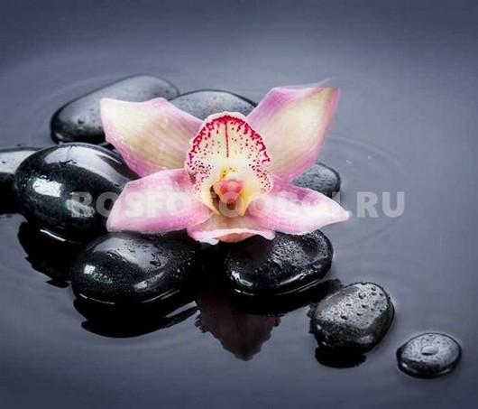 Фотообои Орхидея на черных камушках