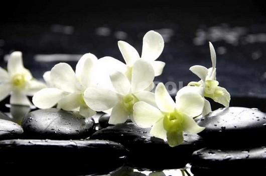 Белая орхидея у воды