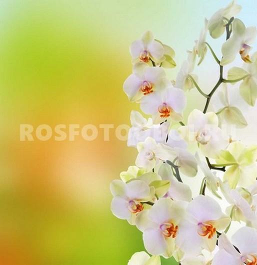 Фотообои Орхидеи на желтом фоне