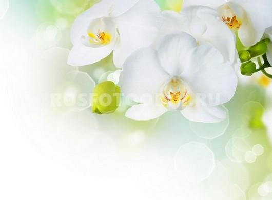 Орхидея на зеленом фоне