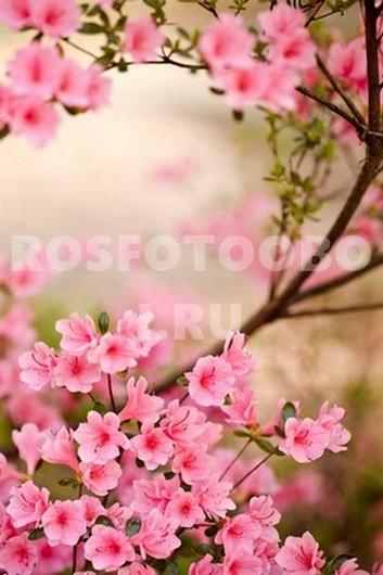 Цветущие ветви