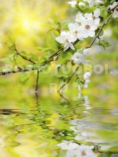 Ветка яблони над прудом
