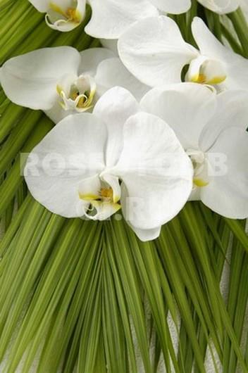 Фотообои Белая орхидея на пальмовых ветках