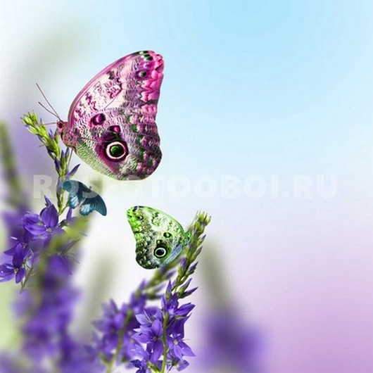 Фотообои Бабочка на лаванде