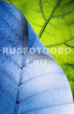 Фотообои Синий и зеленый лист