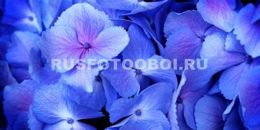Фотообои Синие листики