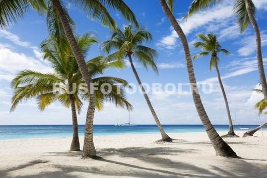 Пальмы и песок