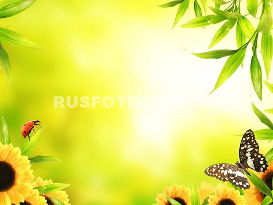 Бабочка и подсолнухи