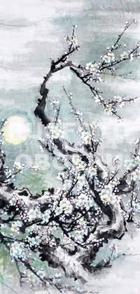 Сакура зимой