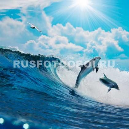 Дельфины прыгают над водой
