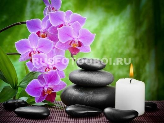 Романтичная орхидея