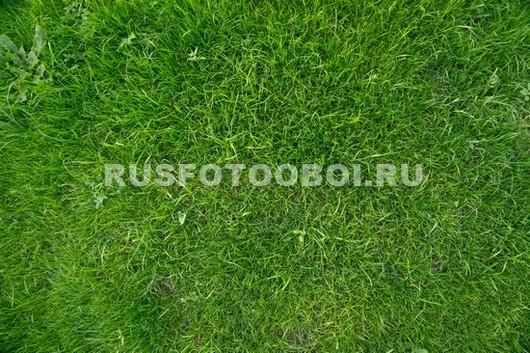 Подстриженный газон