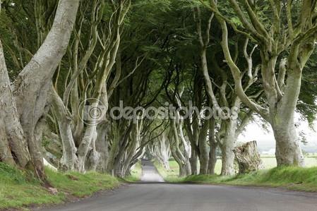 Темные изгороди в ирландии