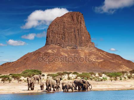 Слоны в африканской саванне
