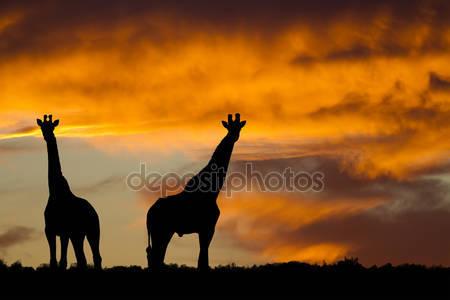 Силуэт африканской дикой природы