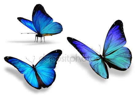 Три голубых бабочки