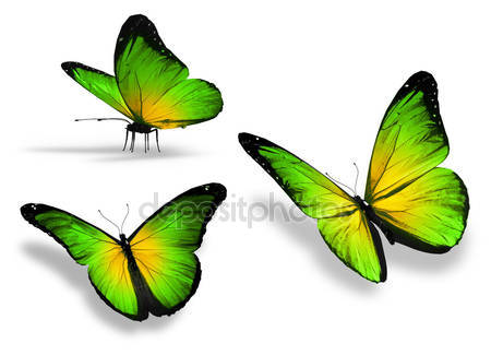 Три желтые зеленые бабочки