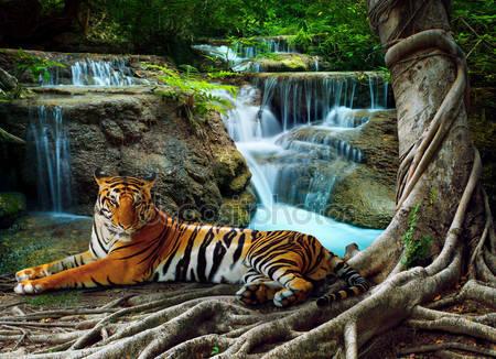 Тигр индокитая