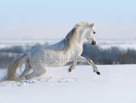 Скачущая галопом белая лошадь