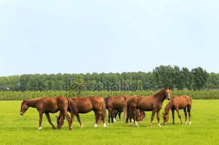 Лошади в зеленых лугах