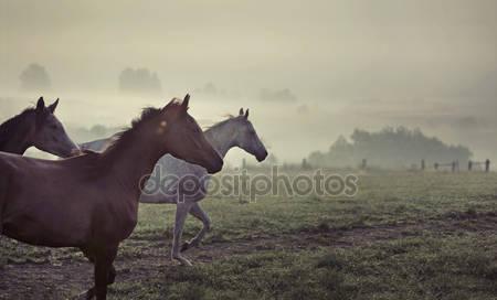 Великая сцена запущенных лошадей