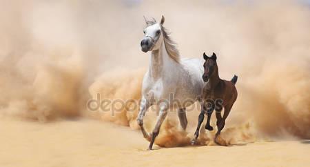 Жеребенок галопом в пустыне