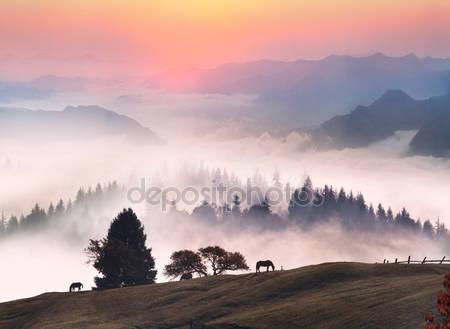 Лошади в туманное утро
