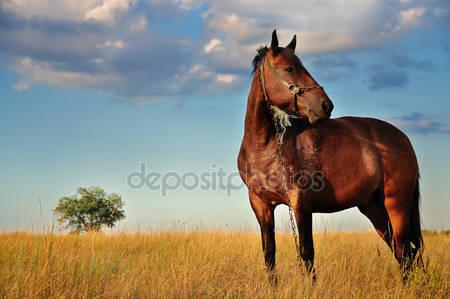 Лошадь и области