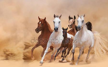 Лошади в пыли