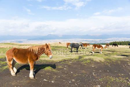Лошади в поле на ферме