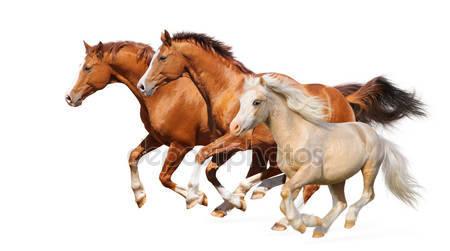 Три лошади галоп