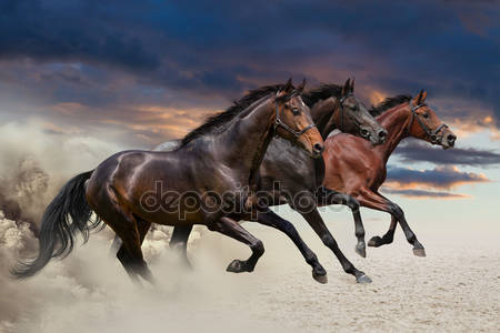 Три лошади галопом
