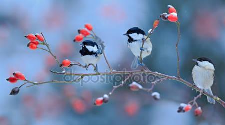Три певчие птицы