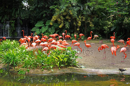 Розовый фламинго на озере с водопадами