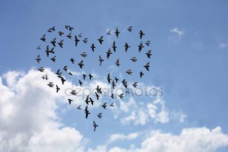 Стая птиц в форме сердца