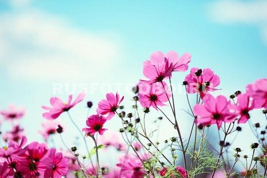 Полевые цветы на фоне неба