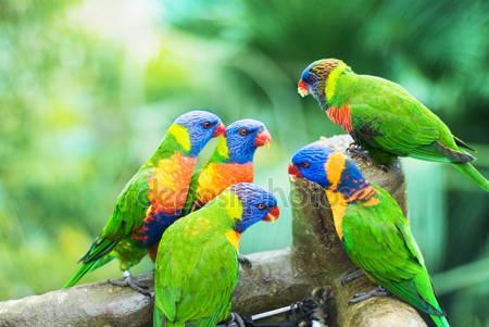 Радуга  из попугаев