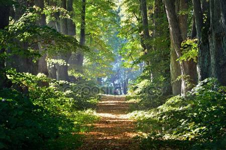 Дорога в живописном лесу