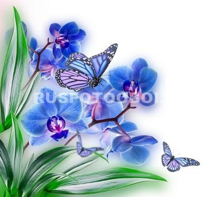 Фотообои Бабочки на синей орхидеи
