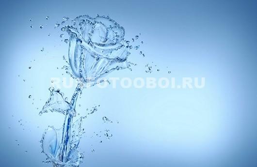 Роза из воды