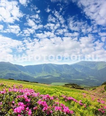 Цветущий луг в горах
