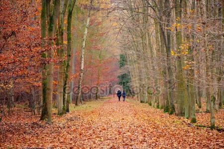 Путь в осеннем лесу