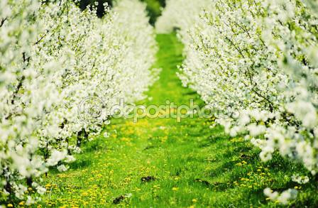 Цветущий сад с белым налетом