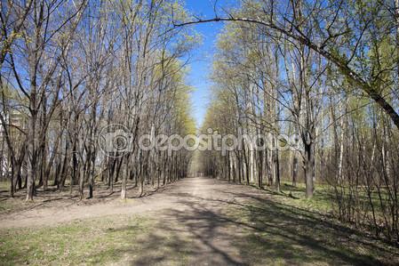 Дорожка в лесу весной