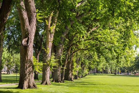 Фотообои Аллея с старыми деревьями